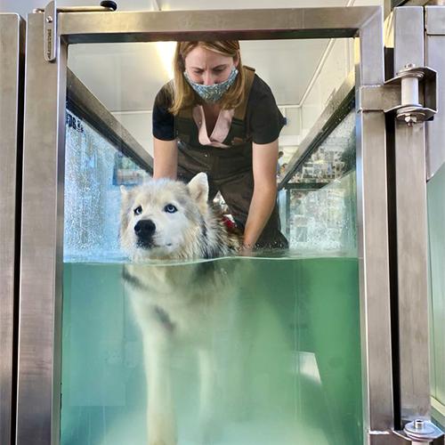 underwater-treadmill